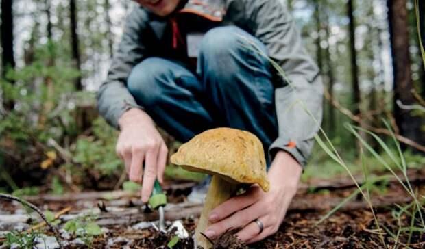 В лес - за штрафом: в Сети обсуждают новые правила сбора грибов и березового сока
