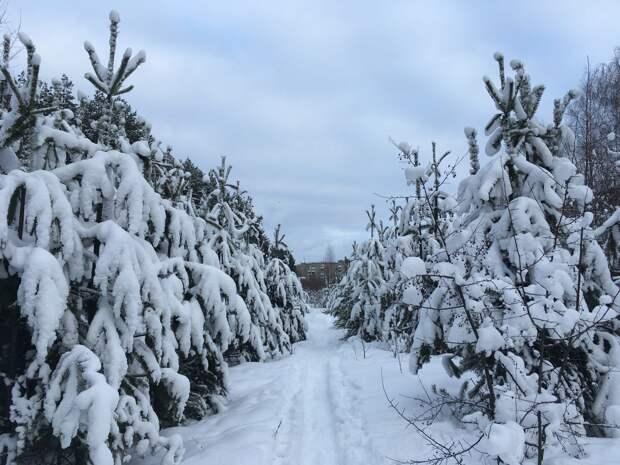 Резкое похолодание и морозы до -17 градусов ожидаются в Удмуртии 10 марта