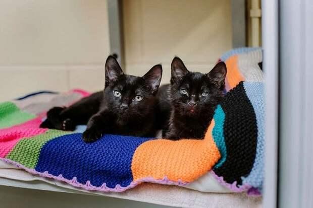 Котята на подушке