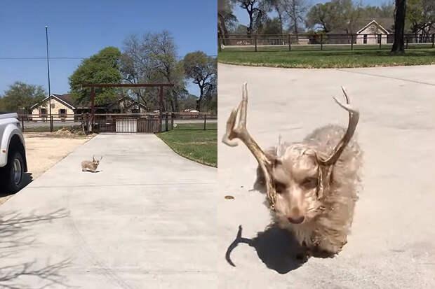 Собака с оленьими рогами развеселила пользователей Сети