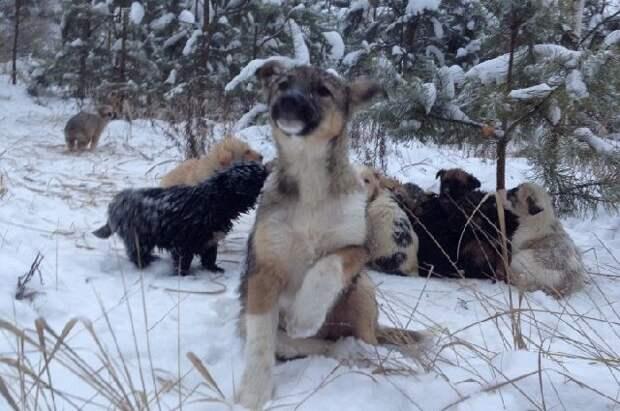 брошенные щенки