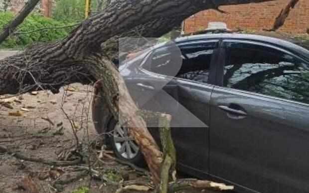 В Рязани на улице Братиславской на автомобиль упало дерево