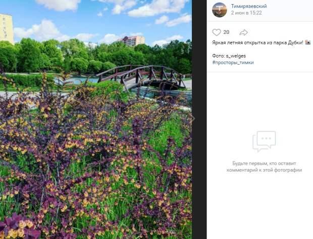 Фото дня: медовые цветы барбариса в «Дубках»