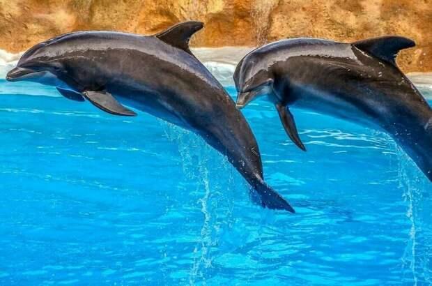 Экспорт китов и дельфинов из России запретят на полгода