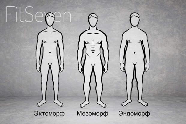 Типы телосложения: эктоморф, мезоморф и эндоморф