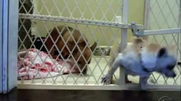 Побег из тюрьмы/Prison Break/1 сезон/5 серия - Видео ролики …