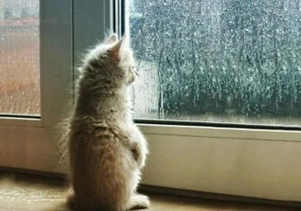 В Калугу возвращаются дожди