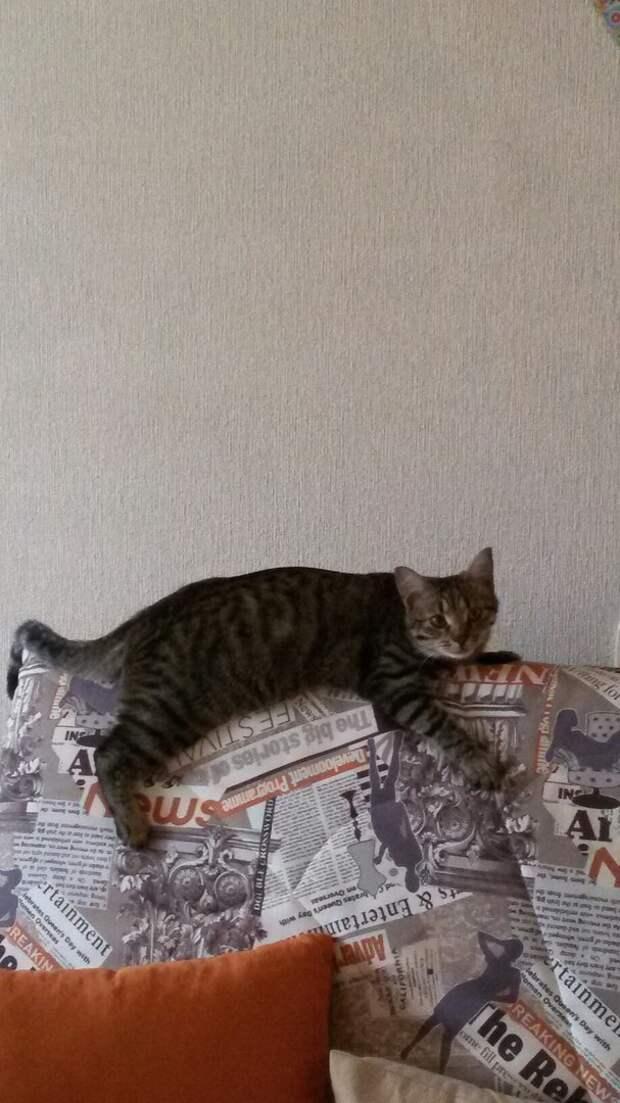 Муж с дочкой спасли от гибели маленького, еще слепого котеночка...