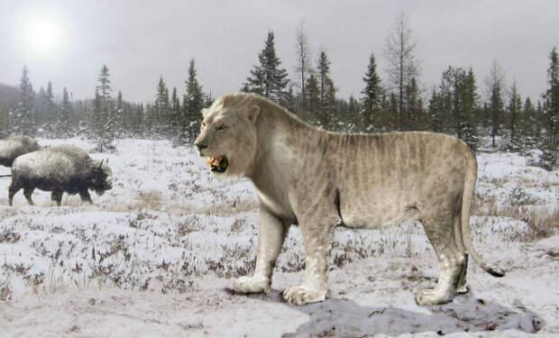 Львы в Якутии: вечная мерзлота раскрыла старые тайны
