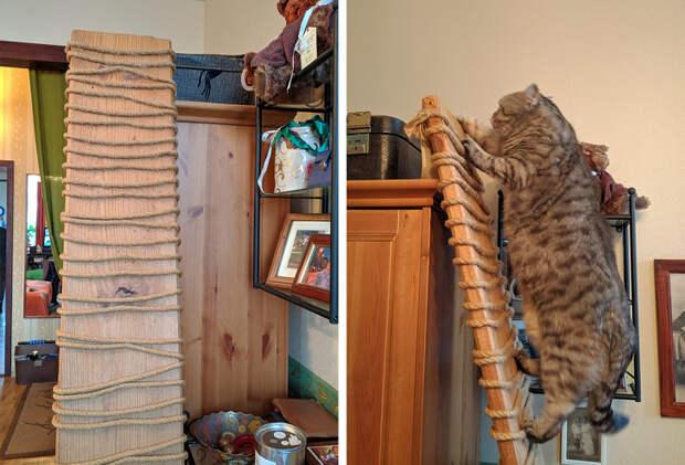 14 лайфхаков, которые облегчат жизнь владельцам кошек