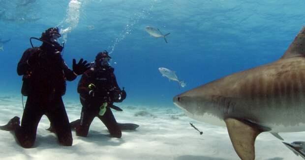 Gronk Underwater 2.jpg
