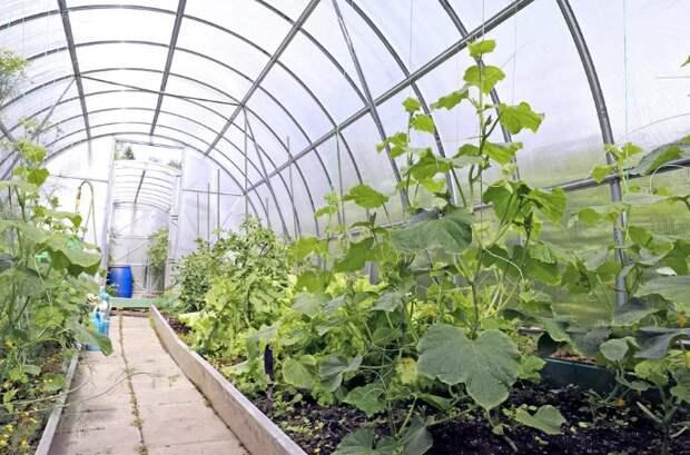 Стоит ли бороться со мхом и позеленением в теплице