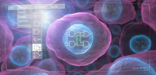 Новая технология позволяет проектировать человеческие клетки