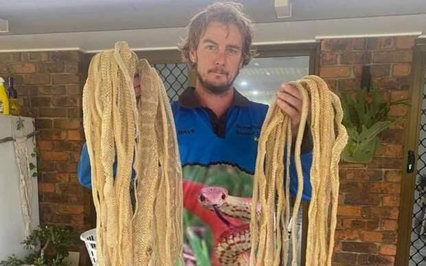 Австралийцы нашли дома кучи змеиных шкур
