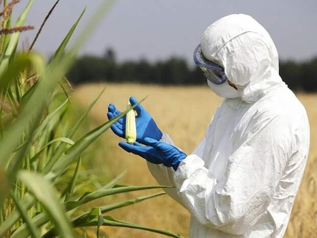 Генетическая модернизация: развеиваем мифы о ГМО