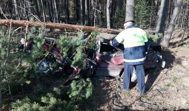 Водитель впал вкому после столкновения сдеревом натрассе под Нижним Тагилом