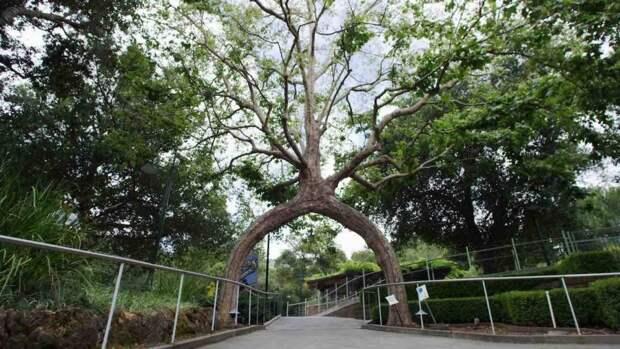 Как получилось, что эти 7 деревьев причудливо извиваются? Дело вовсе не в природе