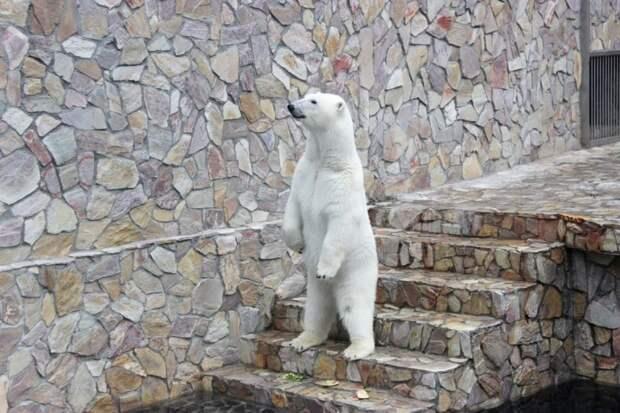 По понедельникам вход в Ленинградский зоопарк будет бесплатным для некоторых групп населения
