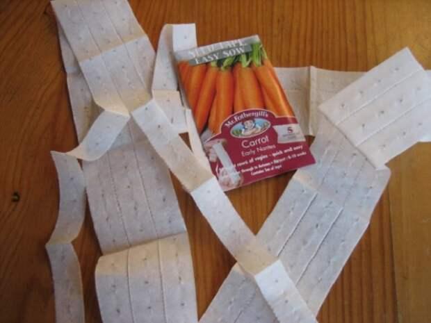 Посев моркови на туалетной бумаге