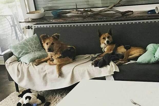 Две бывшие бездомные собаки из Хабаровска уехали к новым хозяевам в Германию