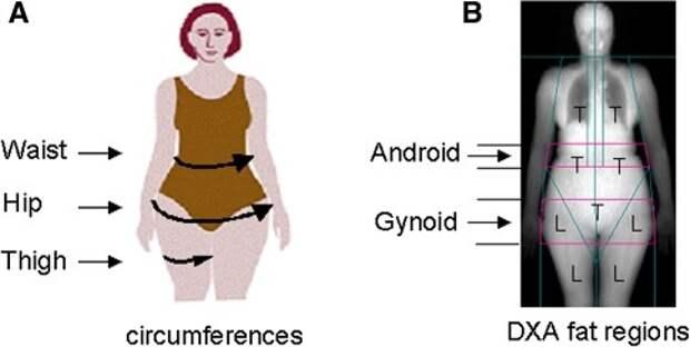 Ожирение: факторы риска и профилактика