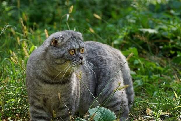 Сибирские археологи объявили вакансию для кота