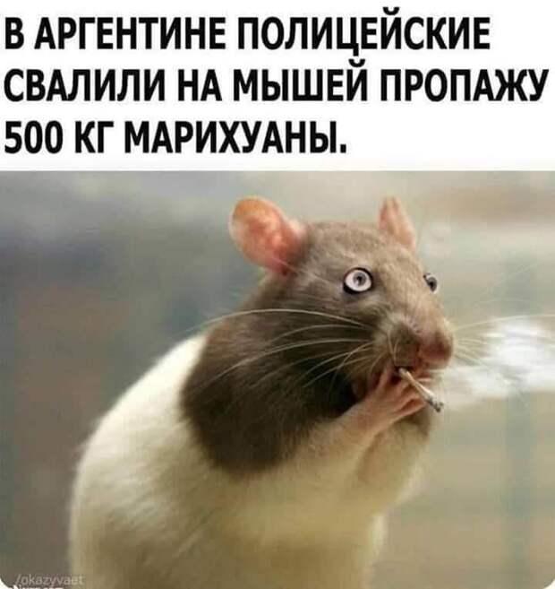 Телевизор: - «Газпром» на следующий сезон резко увеличит финансирование хоккейного клуба Авангард...