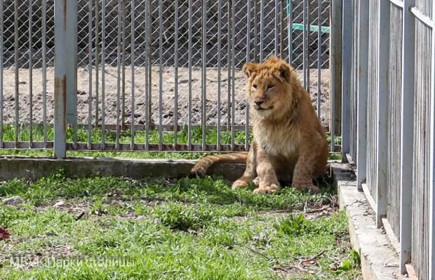 В зооуголке Симферополя установили дополнительные ограждения для животных