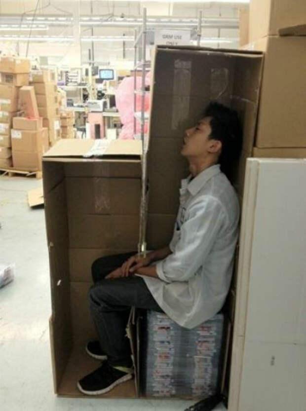 Спать в коробке, почему бы и нет?   Фото: Pikabu.
