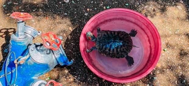 Черепаху спасли на пожаре в Севастополе
