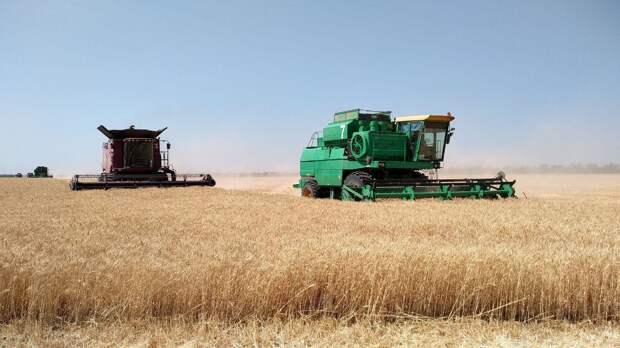 Аграрии оценили шансы РФ сохранить мировое лидерство по экспорту пшеницы