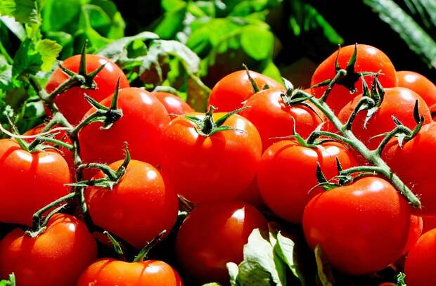 Китайский блогер назвал два правильных способа есть помидоры