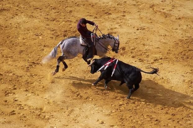 В Испании возобновили проведение Корриды
