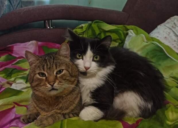 Застукали их за массажем: новосибирцам предложили взять домой двух дружных котов