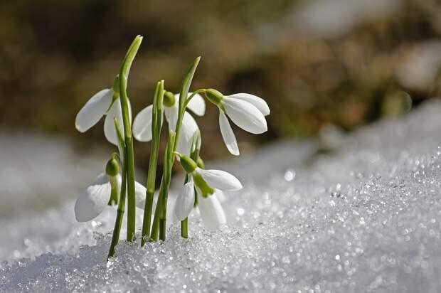 Весна в России будет теплой: синоптики не ждут от погоды неприятных сюрпризов