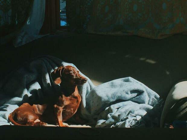 Солнечные блики и собака - чем не классическое полотно?