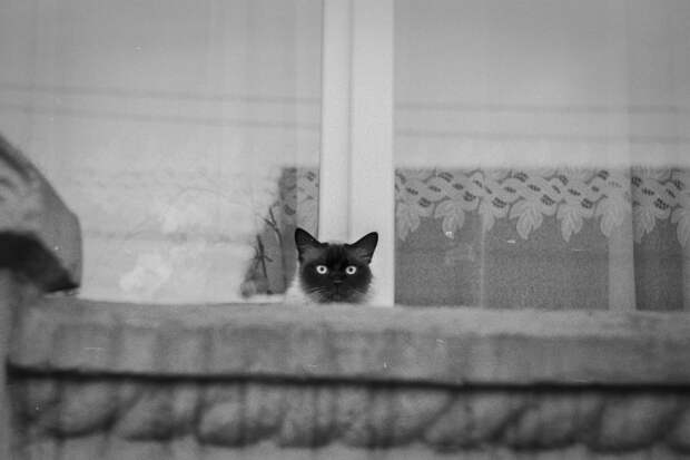cat on film by Bogdan Z. on 500px.com
