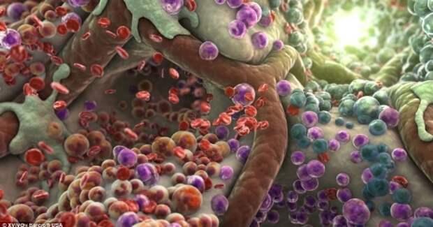 Картинки по запросу человеческое тело под микроскопом