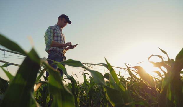 Аграрная отрасль: путь к «цифре»