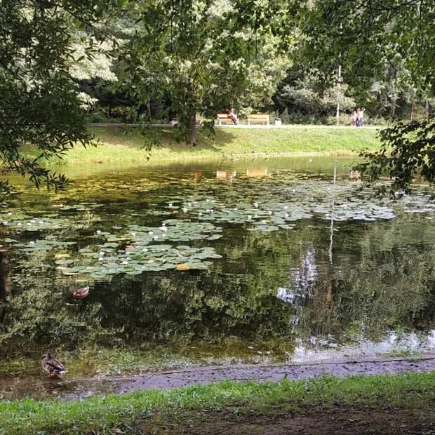 Фото дня: сказочные кувшинки в Лианозовском парке