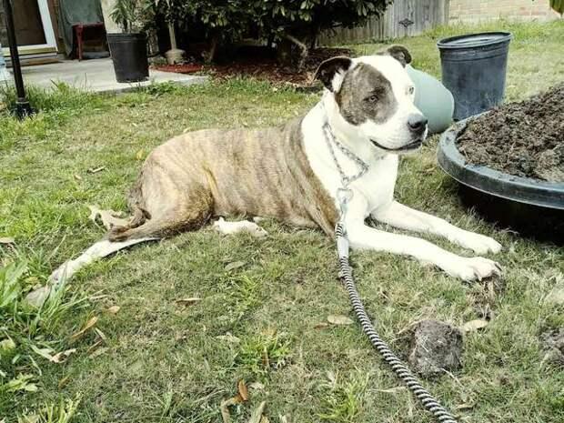 После 8 лет разлуки собака не могла поверить, что встретила свою хозяйку воссоединение, история, питомцы, собака, собаки, трогательно