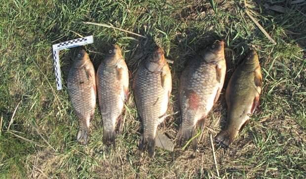На Ириклинском водохранилище задержали браконьера и изъяли три сети