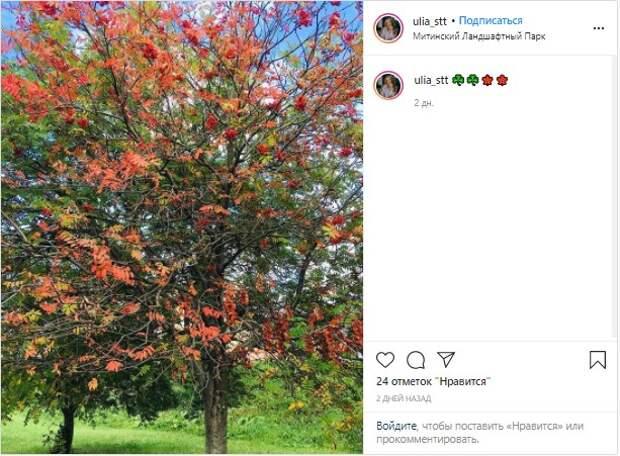 Фото дня: Костры рябин в Митинском парке