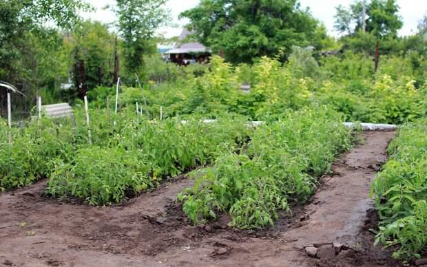 Жители Ижевска смогут поставить прививку от коронавируса на своих огородах