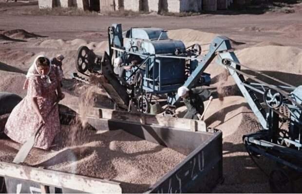 Сбор пшеницы, Украина 50-е, СССР, история, моменты, повседневная жизнь, редкие фото, советский союз, фото