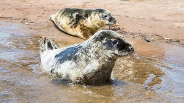 Найденные на берегу Каспийского моря мертвые тюлени могли стать жертвами браконьеров