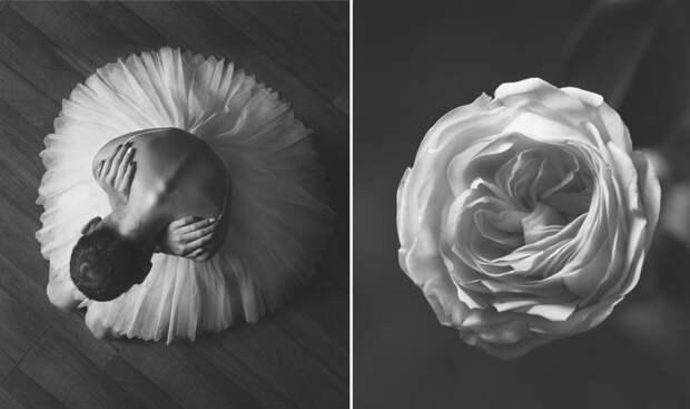 «Балерина и цветы» – серия о сходстве двух изяществ