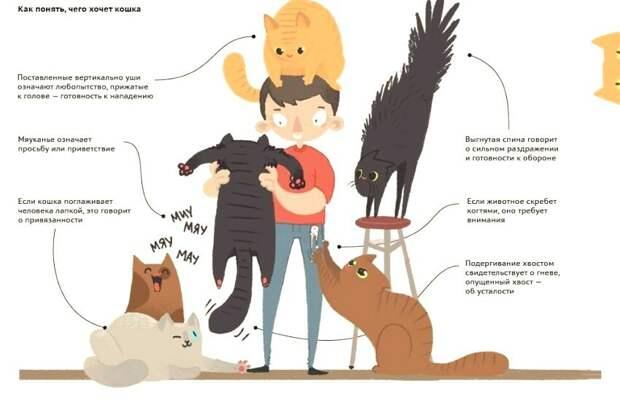 Учимся понимать своих котиков