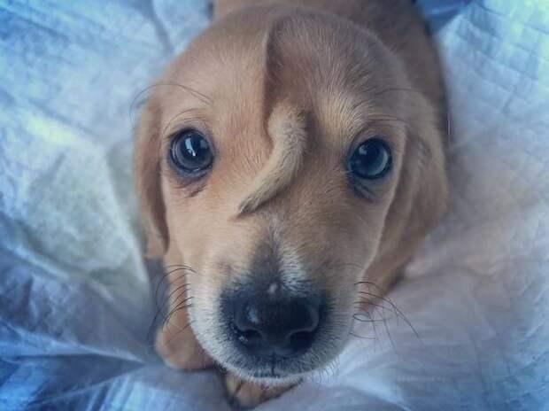 Лающий единорожек: щенок с хвостом на голове стал звездой сети