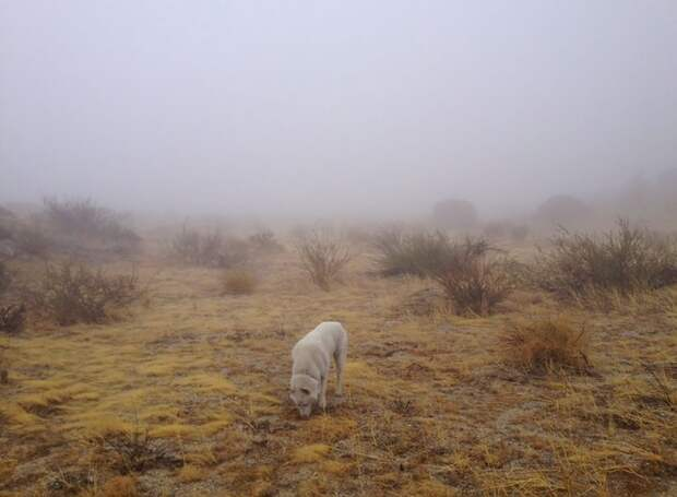 путешествие по США Джона Шторца и его собаки Вольфа (17)